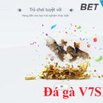 Đá gà V7SB là gì?