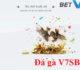 Đá gà V7SB? Hướng dẫn cách chơi đá gà tại V7SB từ A tới Z